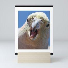 Angry Galah Mini Art Print