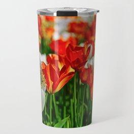 Hello Spring! Amazing Orange and White Tulips in the Springtime Travel Mug