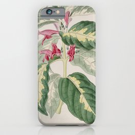 Flower 1227 justicia picta East Indian Caricature Plant13 iPhone Case