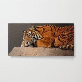 Resting Sumatran Tiger Metal Print