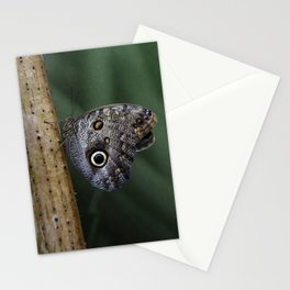 Giant Owl Butterfly On Screw Pine Stationery Cards
