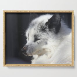 White fox close-up in sunny day. Serving Tray