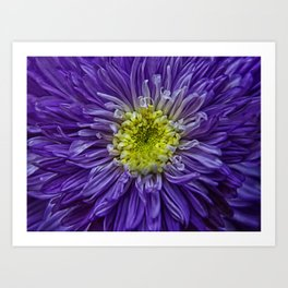 purple explosion Art Print