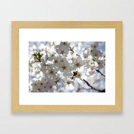 Blooming for Spring Framed Art Print