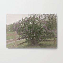 Lilac Bush Metal Print