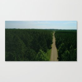 Aerial Southern Lush Green Forest with a Dirt Road in Louisiana Canvas Print