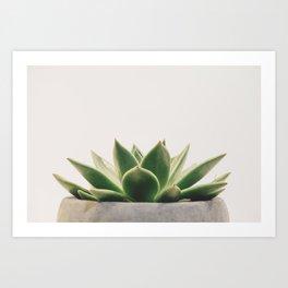 Potted Succulent Art Print