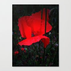 King of fields Canvas Print