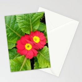 Little red primula flower Stationery Cards
