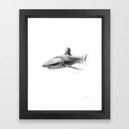 Shark I Framed Art Print