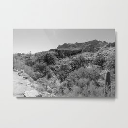 Boyce Thompson Arboretum Black and White No.9 Metal Print