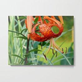 Tiger Lily#2 Metal Print