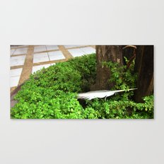 Feather In Green Canvas Print
