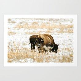 Bison · v Art Print
