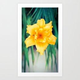 Summer Time Flower Art Print