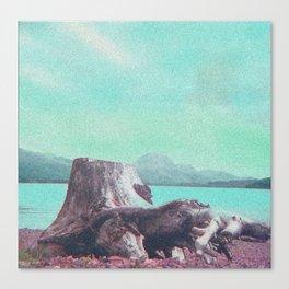 Ancient Pine Tree Canvas Print
