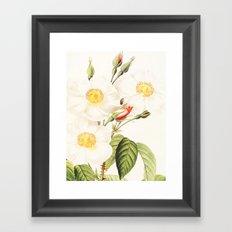 III. Vintage Flowers Botanical Print by Pierre-Joseph Redouté - Rosa Damascena Subalba Framed Art Print
