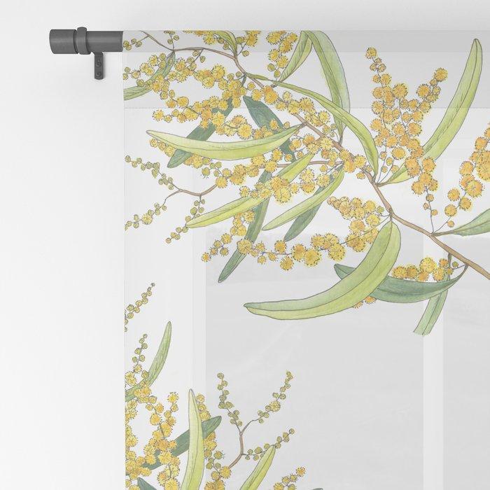 Australian Wattle Flower, Illustration Sheer Curtain
