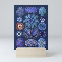 Ernst Haeckel Ascidiae Sea Squirts Vivid Blues Mini Art Print