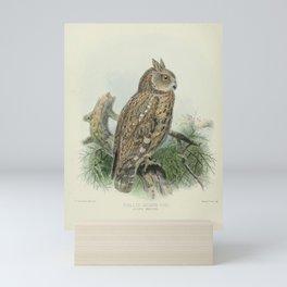 Vintage Print - A History of the Birds of Europe (1881) - 691 Pallid Scops Owl Mini Art Print