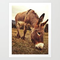 donkey Art Prints featuring Donkey by Vic Torys