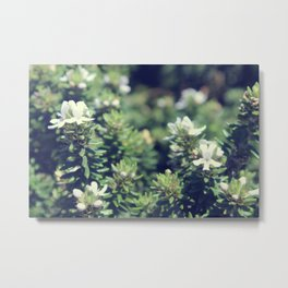 South Head Flowers Metal Print