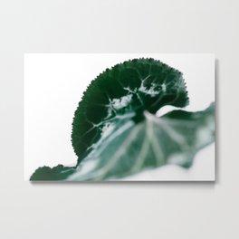 CYCLAMEN PERSICUM 02 Metal Print