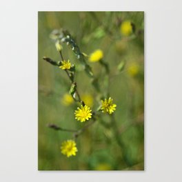 Golden flowers by the lake 2 Canvas Print