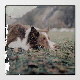 Kiva the dog Canvas Print