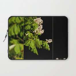 blooming Aesculus tree on black Laptop Sleeve
