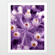 violet beauty Art Print