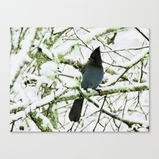 Steller's Jay in the Snow Canvas Print