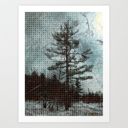 Old Pine Tree Art Print