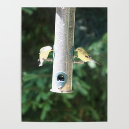 Mr. & Mrs. Goldfinch Poster