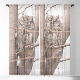 Wild Owl - Ivins, Utah Sheer Curtain