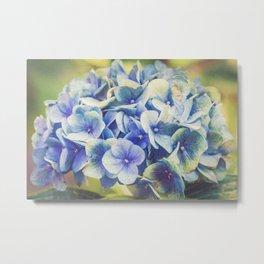 Vintage Blue Hydrangea Metal Print
