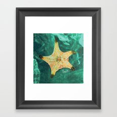 Starfish ~ 2 Framed Art Print