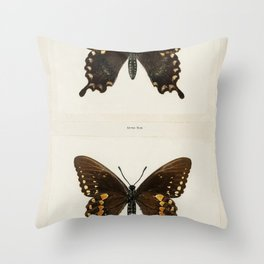Spicebush Swallowtail (Papilio Troilus) from Moths and butterflies of the United States (1900) by Sh Throw Pillow