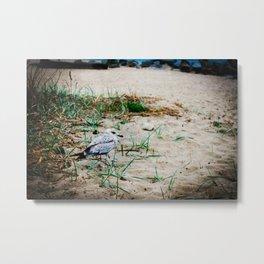 Small seagull on the sandy beach Metal Print