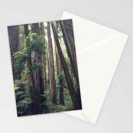 The Redwoods at Muir Woods Stationery Cards