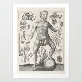 Male Anatomical Medical Chart from 1702 Art Print