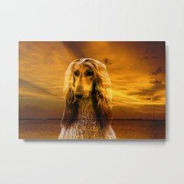 Dog Afghan Hound Metal Print