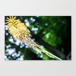 Reach for the Sky Canvas Print