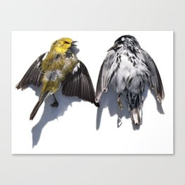 Two Birds Face to Face Canvas Print