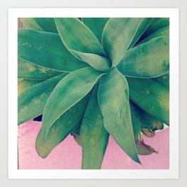 Pink Agave Art Print