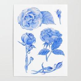 Blue Roses Watercolor Poster