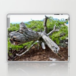 Detail Impaled Laptop & iPad Skin