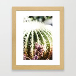 Cactus in the Sunlight Framed Art Print