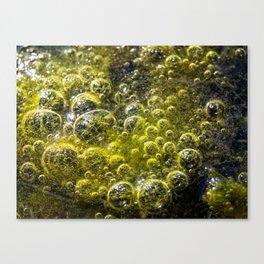 Limo Canvas Print