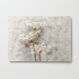 French Country Queen Anne's Lace Metal Print